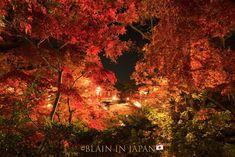 Autumn & More at Sasagawa-Nagare (笹川流れ) in Niigata - our latest newsletter! #japan #ig_japan #newsletter #autumn #fall #niigata #japandreamscapes #日本 #新潟 #紅葉 #笹川流れ #秋 #写真 #写真好きな人と繋がりたい #ファインダー越しの私の世界 Leaf Photography, Photography Tours, Autumn Leaves Japan, Niigata, Natural Beauty, Nature, Naturaleza, Nature Illustration, Off Grid