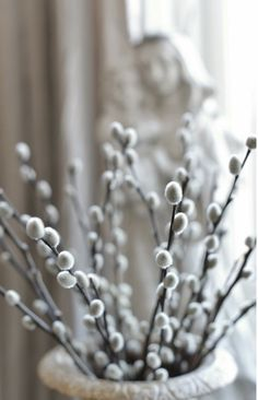 Soft silky pussy willow .. how lovely to cut and enjoy this magical plant indoors in early Spring!