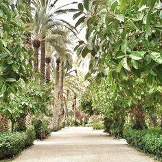 Parque Municipal #Elche #visitelche