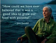 """Jane Goodall """"How could we have ever believed that it was a good idea to grow our food with poisons! Great Quotes, Quotes To Live By, Me Quotes, Inspirational Quotes, Forever Living Aloe Vera, Jane Goodall, Food For Thought, Life Lessons, Wise Words"""