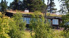 зелёная крыша дома