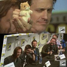 D+ Hi Hamster!