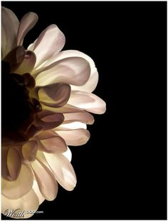 'Abstract Floral - Open photography contest is now closed. Simply Beautiful, Beautiful Flowers, Dark Flowers, Belle Plante, Photography Contests, Black Backgrounds, Mother Nature, Flower Art, Flower Power