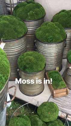 Indoor Container Gardening Moss is trending for greenery in containers, planters, and pots for a simple, minimalist look in interiors Container Gardening, Gardening Tips, Organic Gardening, Indoor Gardening, Gardening Gloves, Moss Decor, Growing Moss, Room Deco, Plantas Bonsai