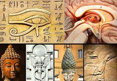 Los seres humanos son otorgados con una cierta parte del cerebro conocida como la glándula pin...