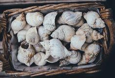 Muscheln und Schnecken als Deko für den Maritimen Landhausstil