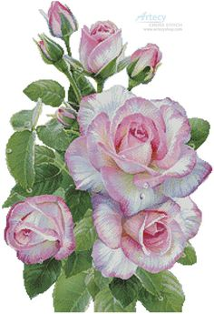 Morning Roses - Cross Stitch Chart - Click Image to Close