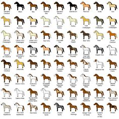 Horse Colors | Horse Play | Pinterest | Colors, Horses and Collage
