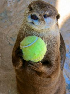 I\'m getting ready for the Otter U.S. Open.