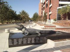 """The """"Bull Gator"""" outside Ben Hill Griffin Stadium (aka: The """"Swamp""""). The statue built was in honor of the 2006 National champion Gators. Sec Football, Football And Basketball, Florida Gators, Florida Athletics, Ben Hill, University Of Florida, Monuments, Statues, Champion"""