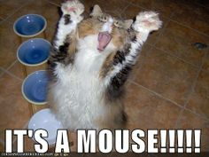 Its A Mouse!