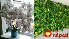 This Simple Homemade Fertilizer Will Guarantee Your Flowers and Plants Fast Flowering and Lush Foliage! Garden Terrarium, Houseplants, Indoor Plants, Gardening Tips, Lush, Beautiful Flowers, Diy And Crafts, Flora, Home And Garden
