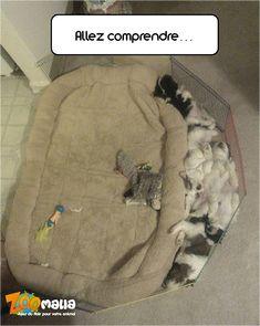 #chiot #coussin #zoomalia  http://www.zoomalia.com/animalerie/panier-et-corbeille-pour-chien-c-194-1.html