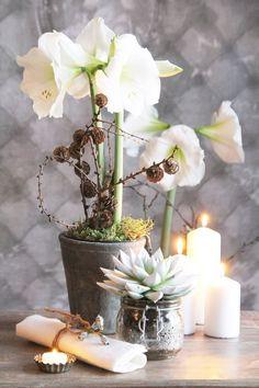 Amaryllis - elegant sør-amerikaner Amaryllis, Elegant, Table Decorations, Plants, Furniture, Home Decor, Classy, Homemade Home Decor, Flora
