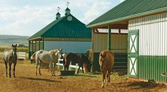 Successful Horse Boarding at Your Barn