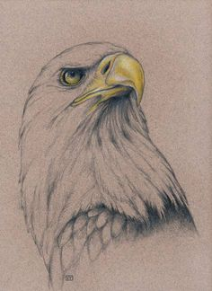 American Bald Eagle by Evey Studios  I redrew this and I did pretty well. i still need to learn how to shade better.