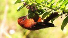 flora y fauna de chiloé - Buscar con Google