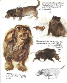 Dachshund Wil;d Boar Teckel by Rien Poortvliet 1983 colour dog print vintage print art canine dog picture home decor wall art