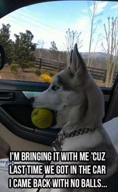 Hilarious & probably what goes through my dogs mind when he gets into the car