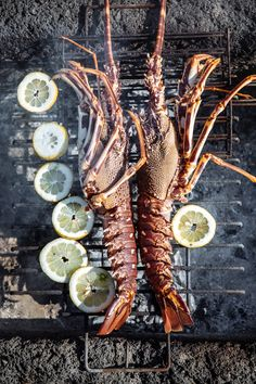 Grilled lobster :: Photography by Filipe Lucas Frazão