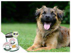 Prova la linea #bio di Mongrel. Contiene il giusto bilanciamento nutritivo ed è adatta ai cani di tutte le età. Scopri sul sito: http://www.mongrelpet.com/boot/cane.php