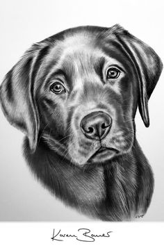Graphite pencil drawing - custom art with great attention to details by portrait artist Karen Bauer. Art Drawings Beautiful, Dark Art Drawings, Art Drawings Sketches, Sketches Of Dogs, Drawings Of Dogs, Realistic Animal Drawings, Pencil Drawings Of Animals, Animal Sketches, Dog Pencil Drawing