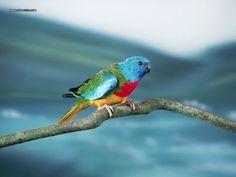 BIRDSCOLORFULPAJAROSAVESCOLORESUNUSUALINUSUALES5