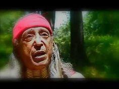 Little Hawk - Native American Wisdom   Indigenous Storytelling