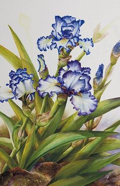 Watercolor demonstration of white & purple iris by Lisa Hll step 4