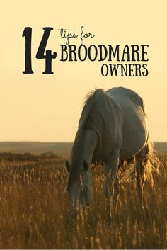 Before breeding season is upon us, use these tips to prep your broodmare for spring.