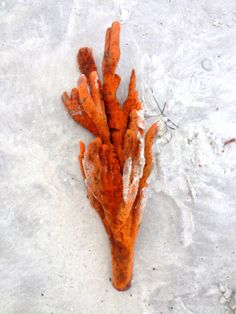 Coral washed up on Bean Point