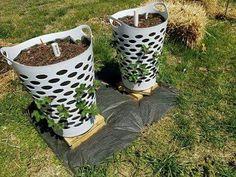 Strawberry basket planter