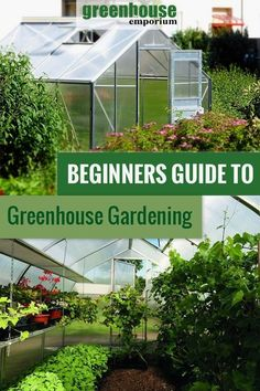 Do you want to start growing plants in a greenhouse? Or did you just purchase a … Do you want to start growing plants in a greenhouse? Or did you just purchase a greenhouse? Then start here with this guide to greenhouse gardening for beginners!