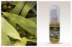 Aceite esencial de Eucaliptus. Exquisito en invierno.