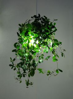 Pflanzenlampe Source by Ceiling Light Covers, Lamp Light, House Plants Decor, Plant Decor, Faux Plants, Indoor Plants, Office Lamp, Air Plant Display, Green Rooms