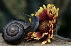 snail antonijakodoman