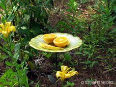 Attracting butterflies and hummingbirds to your garden #diy