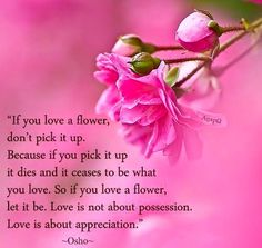 If you love a flower, don't pick it up. Because if you pick it up it dies and it ceases to be what you love. So if you love a flower, let it be. Love is not about possession. Love is about appreciation. Dont Love, What Is Love, Love You, Let It Be, My Love, I Cried For You, Birthday Wishes, Birthday Cards, Happy Birthday