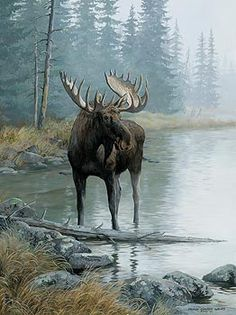Quiet Water Moose Framed Wildlife Art Print featuring a bull moose wading into a calm stream. Art by Pesis Clayton Weirs. Wildlife Paintings, Wildlife Art, Animal Paintings, Bull Moose, Moose Art, Wild Life, Moose Pictures, Vida Animal, Art Occidental