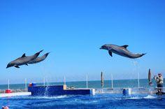 Marineland show, next door to - Vacation Rentals in Palm Coast, Florida -