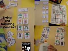 Living and Nonliving kindergarten sort