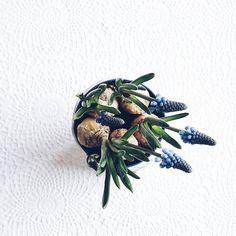 Frühling im Anmarsch...  Nachdem wir noch letztes Wochenende im Schnee waren bin ich nun bereit für den Frühling. . Spring is growing fast. Can you smell it? . . #springisintheair #icanfeelit #flowers #plants #onthetable #tablesituation #onthetableproject #fromabove #aquitestyle #keepitsimple #minimallove #lessismore #minimalism #simpleandstill #seekthesimplicity #simplygood #pursuepretty #flashofdelight #simplicity #traubenhyazinthe #muscari #frühblüher #frühling