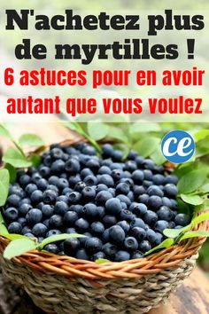 You Can Grow Blueberries -tips and ideas for growing blueberries in any climate and any garden type from containers to permaculture! Fruit Garden, Edible Garden, Garden Plants, Box Garden, Flowers Garden, Garden Beds, House Plants, Growing Plants, Growing Vegetables