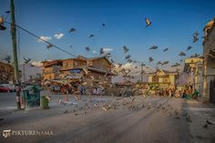 Hazratbal Srinagar pigeons fly