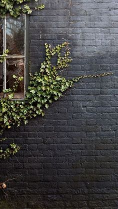 Black paint in a matte finish gives an exterior brick wall a modern update. A creeping vine adds extra character to the irregular wall surface.
