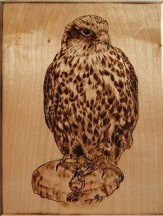 *Sacred Hawk* Pirografia su Legno di Acero