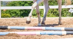Each time you school, you have a chance to improve your horse's way of going. Best Stretches, Easy Workouts, Dressage, Equestrian, Improve Yourself, Competition, Engagement, Horse, Tips