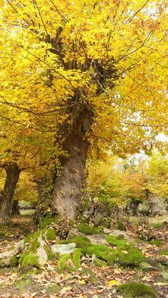 روستای کوته کومه-لوندویل آستارا آبان -پاییز هزار رنگ