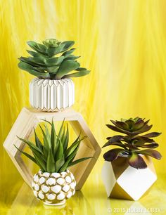 If you have a thing for clean, simple, utterly now décor—you probably have a thing for succulents. And we do too!