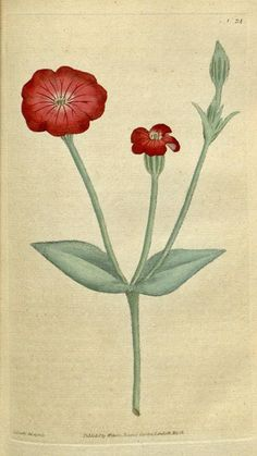 v.1-2 (1787-1789) - The Botanical magazine, or, Flower-garden displayed ... / - Biodiversity Heritage Library